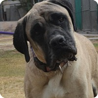 Adopt A Pet :: Rex - Goodyear, AZ