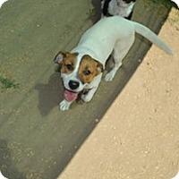 Adopt A Pet :: Dawg-Dawg - Peyton, CO