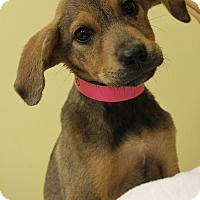 Adopt A Pet :: Dana - Waldorf, MD