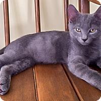 Adopt A Pet :: Blueberry - Alexandria, VA