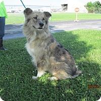 Adopt A Pet :: Sadie - Mount Sterling, KY