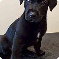 Adopt A Pet :: Toby - Shorewood, IL