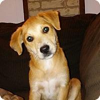 Adopt A Pet :: Sassy - Matawan, NJ