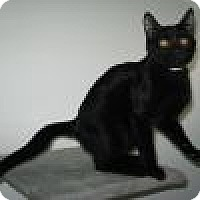 Adopt A Pet :: Ralphie - Powell, OH
