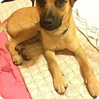 Shepherd (Unknown Type) Mix Dog for adoption in Salem, Oregon - Beau