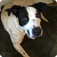 Adopt A Pet :: Jacks - Lyndhurst, NJ