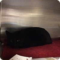 Adopt A Pet :: Shadow - Janesville, WI