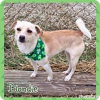 Adopt A Pet :: Blondie - Jasper, IN