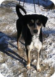 Anatolian Shepherd Mix Dog for adoption in Acushnet, Massachusetts - Dixie Bell
