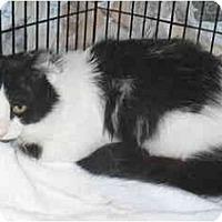 Adopt A Pet :: Tux - Colmar, PA