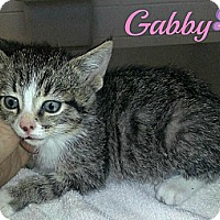 Adopt A Pet :: Gabby - La Follette, TN