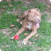 Adopt A Pet :: Chelsea - Long Beach, NY
