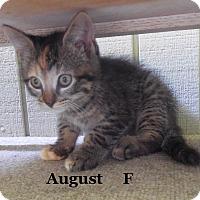 Adopt A Pet :: Augusta - Bentonville, AR