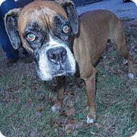 Adopt A Pet :: Ella - Brentwood, TN