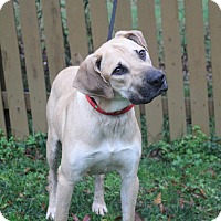 Adopt A Pet :: Charlie - Manhasset, NY