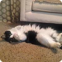 Adopt A Pet :: Tayler - Tempe, AZ