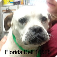 Adopt A Pet :: Florida Bell - baltimore, MD