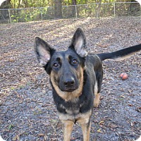 Adopt A Pet :: Cortana - Green Cove Springs, FL