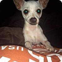 Adopt A Pet :: Flower - Katy, TX