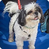 Adopt A Pet :: Ida - Loudonville, NY