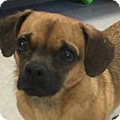 Adopt A Pet :: Moe
