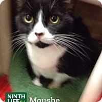 Adopt A Pet :: Moushe - Oakville, ON