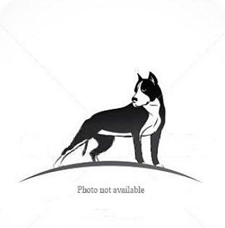Pit Bull Terrier Dog for adoption in San Bernardino, California - URGENT ON 10/20 San Bernardino