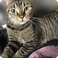 Adopt A Pet :: Wanda - Staten Island, NY