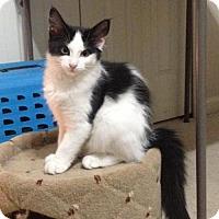 Adopt A Pet :: BANDIT - Toledo, OH