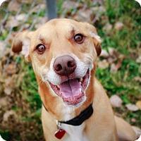 Adopt A Pet :: Rocky - Owatonna, MN