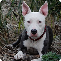 Adopt A Pet :: Cassie - Long Beach, NY