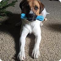 Adopt A Pet :: Toni - Grafton, WI