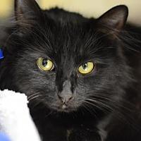 Adopt A Pet :: Pepperment Patty162221 - Atlanta, GA