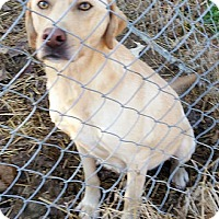 Adopt A Pet :: Petey #2 - Purcellville, VA