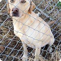 Adopt A Pet :: Petey #2 - Purcellville, VA