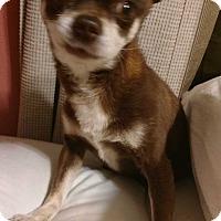 Adopt A Pet :: Angus - San Diego, CA