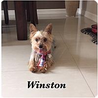 Adopt A Pet :: Winston - Brownsville, TX