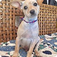 Adopt A Pet :: Harpo - Santa Ana, CA