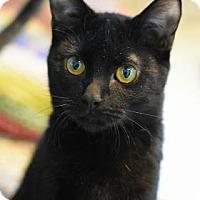Adopt A Pet :: Boo - Aiken, SC