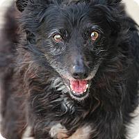 Adopt A Pet :: Katie - Lafayette, IN