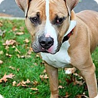 Adopt A Pet :: Rocky - Bridgewater, NJ