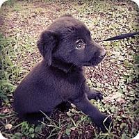 Adopt A Pet :: Clark - Austin, AR