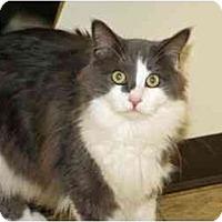 Adopt A Pet :: Citron - Racine, WI