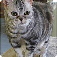 Adopt A Pet :: Amari - Davis, CA