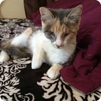 Adopt A Pet :: Roxy - Modesto, CA