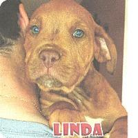 Adopt A Pet :: Terrier Mix Puppy - Linda - Midlothian, VA