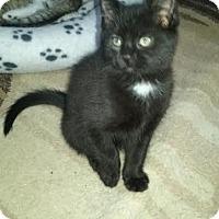 Adopt A Pet :: 4-BLACK JACK - Delmont, PA
