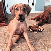 Adopt A Pet :: Nate - Sacramento area, CA