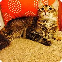 Adopt A Pet :: Cheryl - Addison, IL
