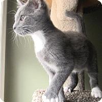 Adopt A Pet :: Lyon - Apex, NC